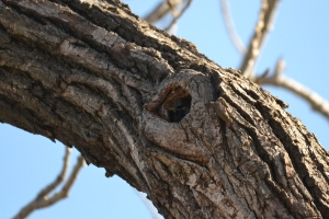 Bird in Tree hole