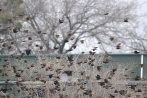 Flock of Birds 01