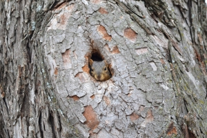 Squirrel [in hole] 01
