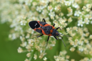Bug 02