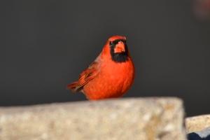 Cardinal  05