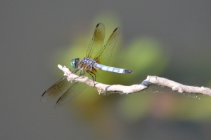 Dragon Fly 05