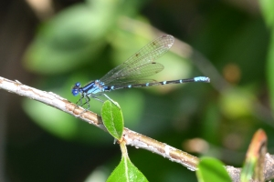 Dragon Fly 05