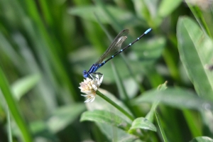 Dragon Fly 06