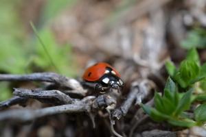Lady Bug 01