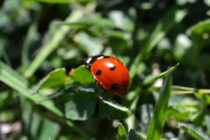 Lady Bug 02