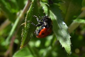 Lady Bug 07