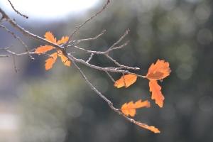 Leaves - orange 01