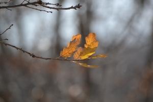 Leaves - orange 02