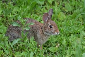 Rabbit 08