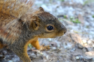 Squirrel 04