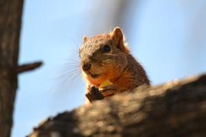 Squirrel0 01