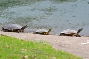 Turtle  04