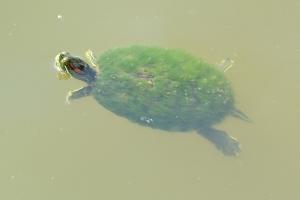Turtle 05