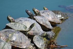 Turtle  06
