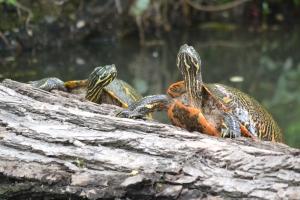 Turtle 08